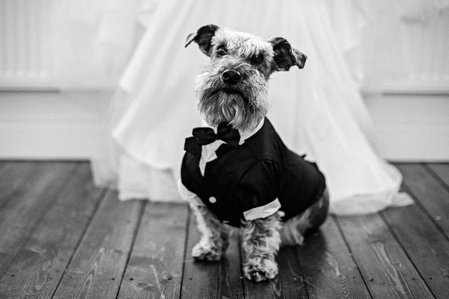 Dog in Tuxedo 30 James Street Liverpool wedding photography