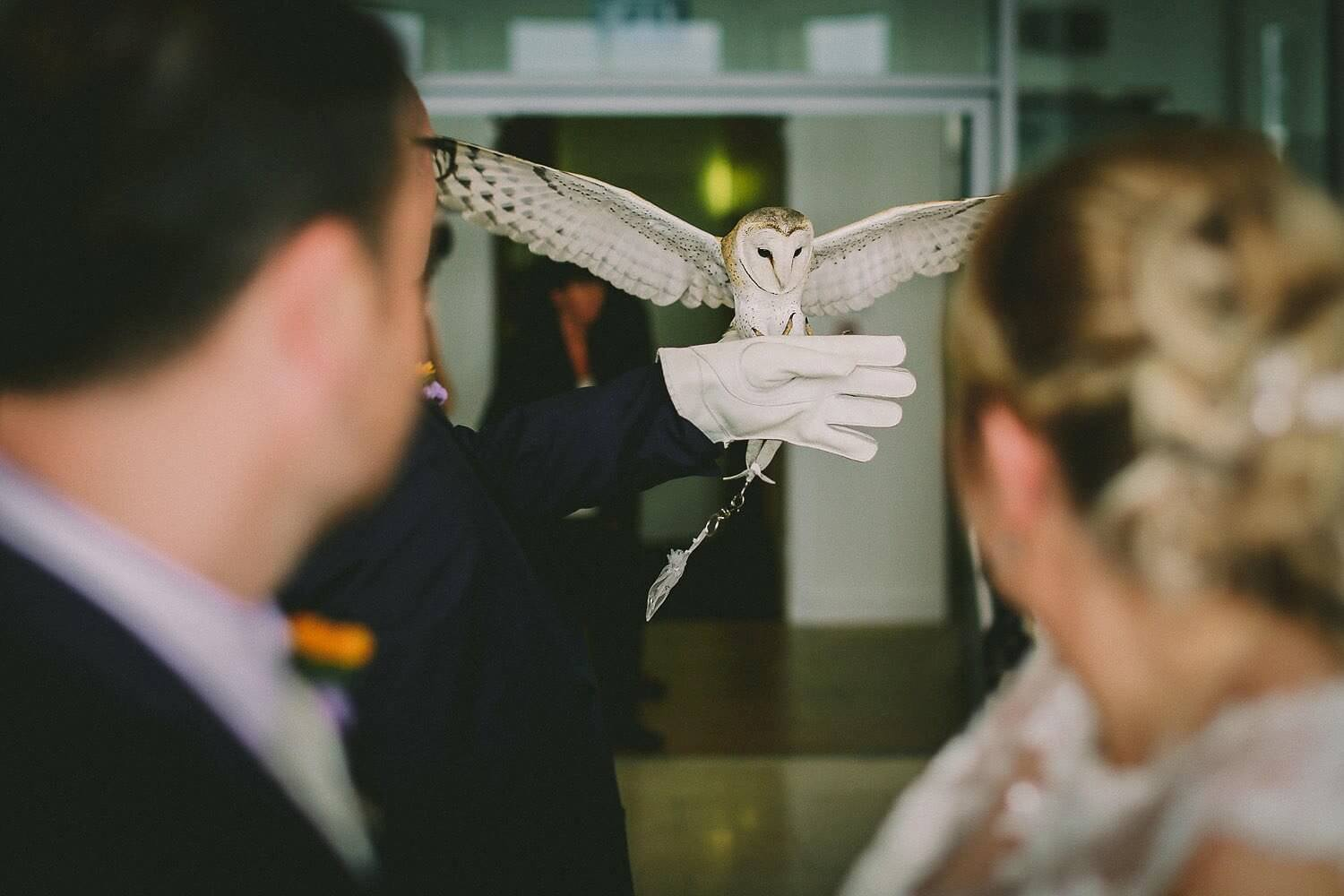 Owl bring rings during wedding ceremony Royal Liver Building wedding photography